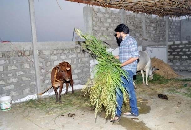 Pawan Kalyan Farm Work in His Farm House