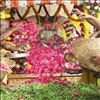 Pushpayagam at Sri govindaraja swamy vari temple tirupathi