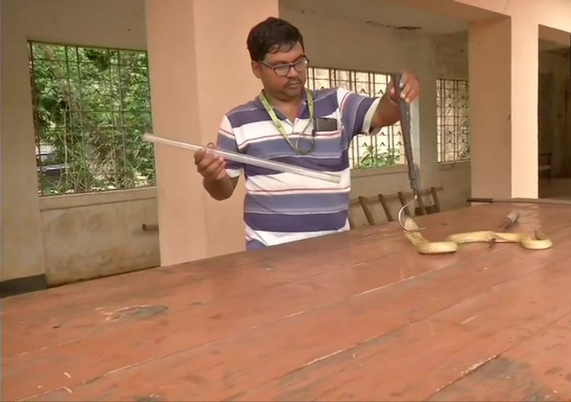 An Injured Indian Cobra Snake Was Operated By Doctors At Bhubaneswar