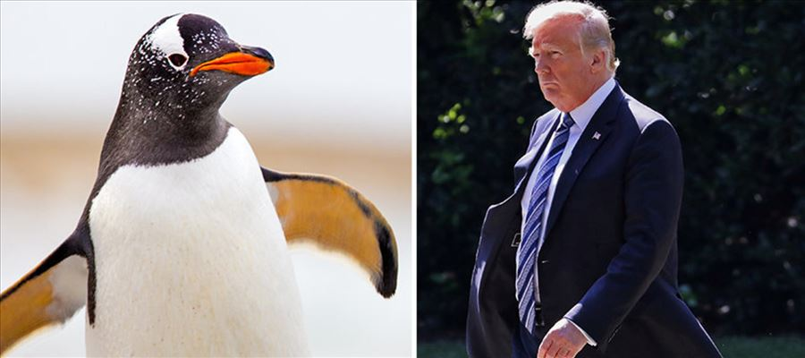 Photos of Donald Trump replaced with Penguins