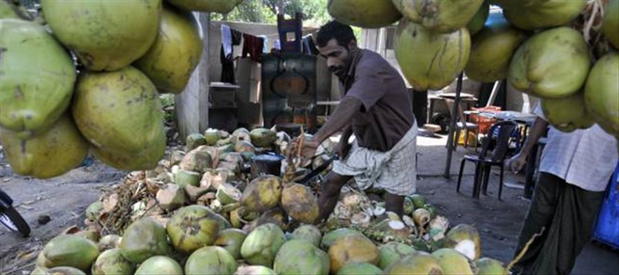 Hike in Tender Coconut price due to Cyclone Gaja