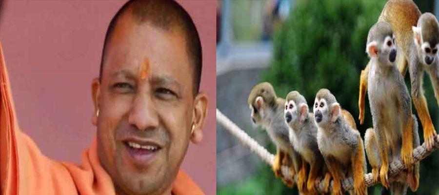 Yogi Adityanath's plan to escape monkeys!