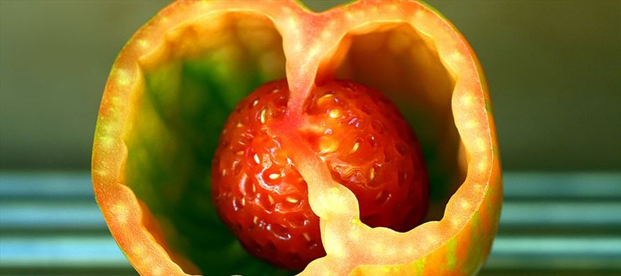 The Alien tomato that went viral!!