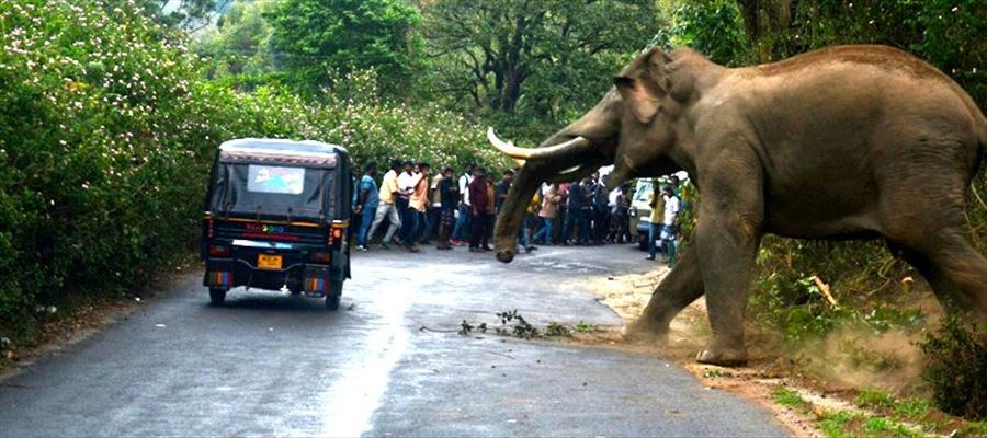 Elephant causes rampage in Kerala!