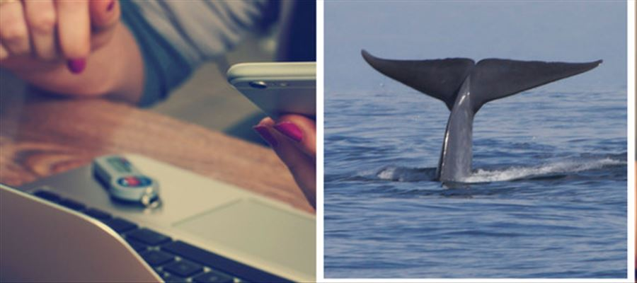 Class 9 boy rescued from 'Blue Whale' challenge internet game