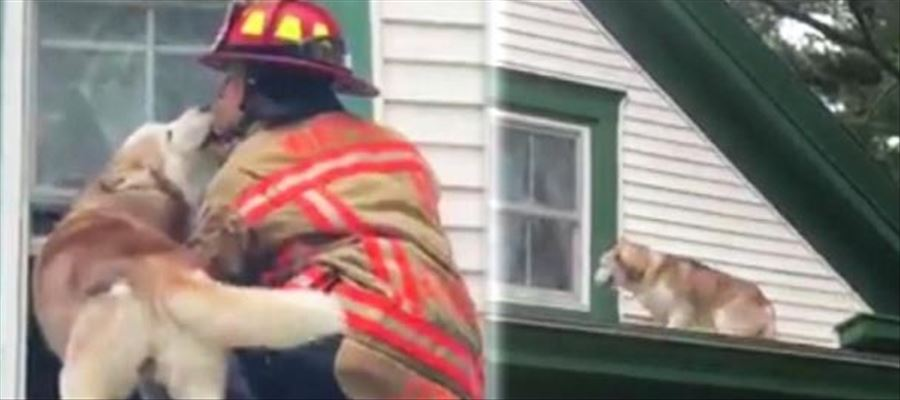Dog rescued after got stuck on rooftop - Video goes Viral