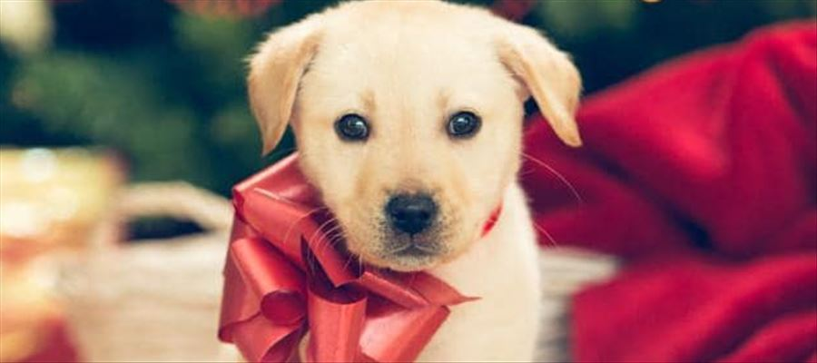 Puppy Sales at Pet Shops banned in Germany during Christmas