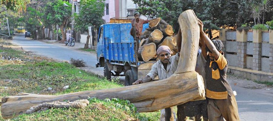 Is there any team to prevent cutting down of 171 Trees at Bengaluru?
