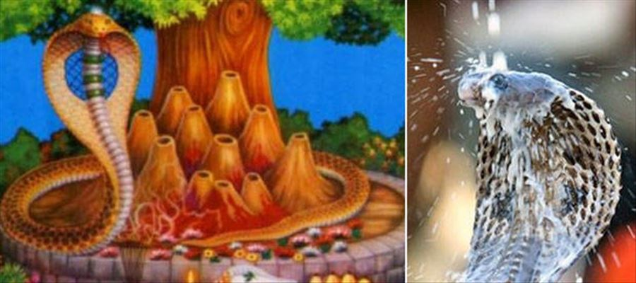 Naga Chaturthi - The Festival Story and why is it celebrated?