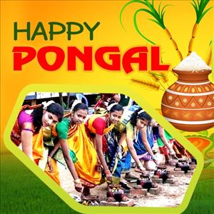 Significance of Pongal